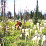 Classic Mountain Bike Rides: Ants Basin, Idaho